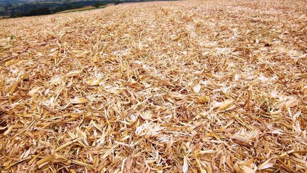 Próxima safra: produtores rurais investem na palhada para preparar o solo em MT